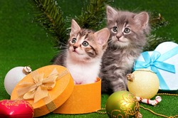 Cute kittens in Christmas gift box on artificial green grass