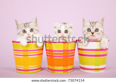 Cute kittens sitting inside colorful pots containers