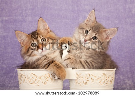 Cute kittens sitting inside cream pails buckets on lilac background