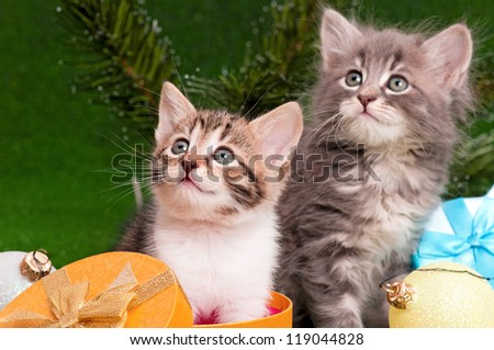 Cute kittens with Christmas gift box on artificial green grass