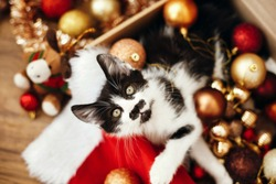 Cute kitty sitting in box with red and gold baubles, ornaments and santa hat under christmas tree in festive room. Merry Christmas concept. Adorable funny kitten witn green eyes