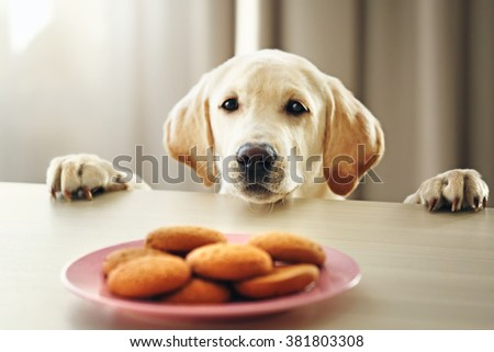 Stock Photo Cute Labrador dog and cookies against wooden table on unfocused background