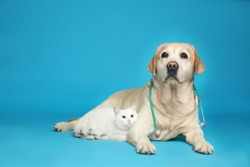 Cute Labrador dog with stethoscope as veterinarian and cat on light blue background