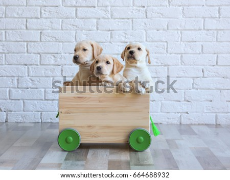 Cute labrador retriever puppies with wooden cart at home #664688932