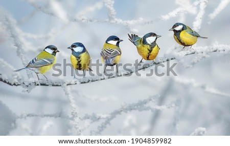 Cute little birds. Winter nature background. Great tit. Сток-фото ©