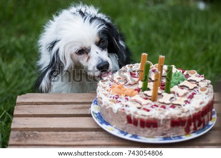 Happy Dog Eats Birthday Cake At Party Images And Stock