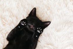 Cute little black kitten sleeps on fur white carpet