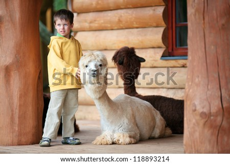 Cute little boy playing with a baby alpaca in farm - stock photo