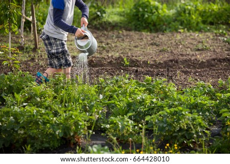 Cute little boy watering plants with watering can in the garden. Adorable little child helping parents to grow vegetables and having fun. Activities with children outdoors. #664428010