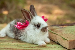 Cute little bunny rabbit with pink bow on wooden board on natural background