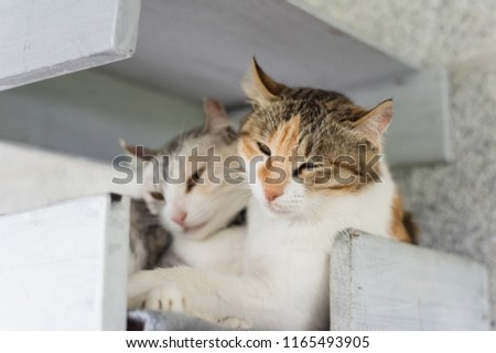 cute little cat doze and want to sleep