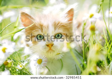 Cute little cat in spring flowers and grass, looking at the camera