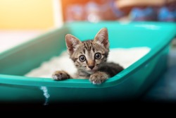 Cute little cat in the sandbox