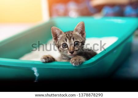 Cute little cat in the sandbox Сток-фото ©