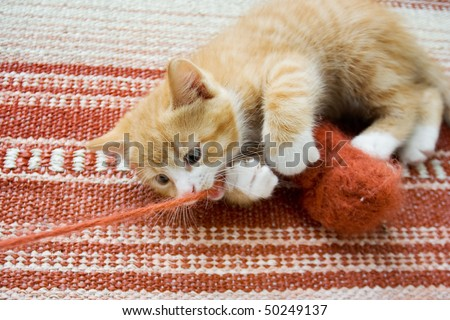 Cute little cat playing with wool reel