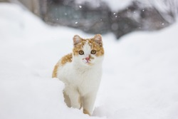Cute little cat sitting in the snow.