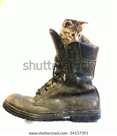 cute little cate sitting on a large boot