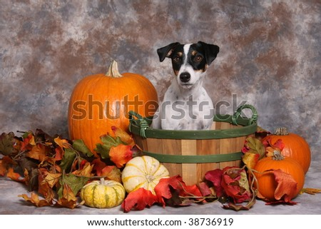 Cute little dog in autumn scene