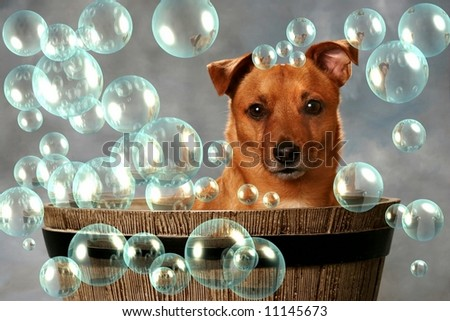 Cute little Dog in Barrel with Bubbles