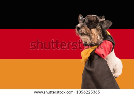 a21db8fb1f1 cute little dog wrapped in germany flag - proud Jack Russell Terrier with  cool sunglasses