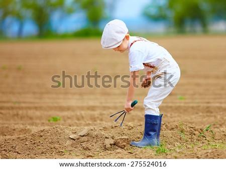 cute little farmer working with spud on spring field