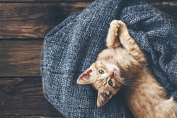 Cute little ginger kitten is resting in soft blanket on wooden floor and looking at camera