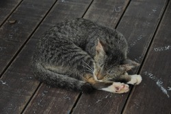 Cute little ginger kitten is sleeping on wooden floor