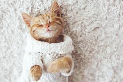 Cute little ginger kitten wearing warm knitted sweater is sleeping on the white carpet