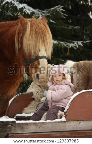 Cute little girl sitting in the sledges and big palomino draught horse standing near