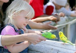 Cute little girl with the little shell parakeet