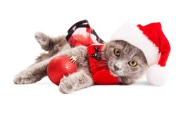 Cute little grey kitten wearing a Christmas Santa Claus outfit holding a red bauble looking forward into camera