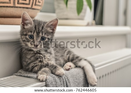Cute little grey kitten with blue eyes relaxing on the warm radiator closeup