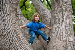 Cute little kid boy enjoying climbing on tree on summer day. Cute child learning to climb, having fun in forest or park on warm sunny day. Happy time in nature