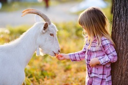 cute little kid feeding a goat at farm