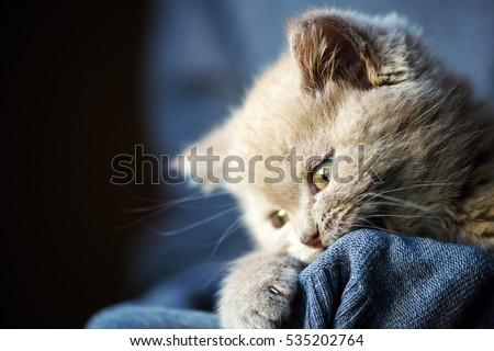 Cute little kitten #535202764
