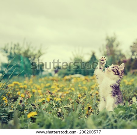 Cute little kitten catches something in the air in summer park. With vintage filter