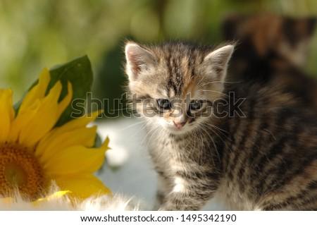 Cute little kitten exploring the garden #1495342190