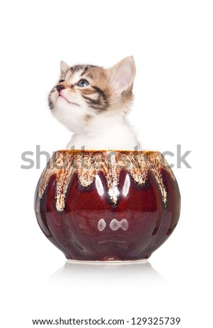 Cute little kitten in a clay cooking pot  isolated on white background