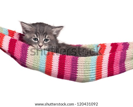Cute little kitten in a hammock isolated on white background