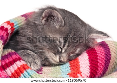 Cute little kitten in a knitted scarf isolated on white background