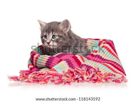 Cute little kitten in a scarf isolated on white background
