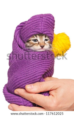 Cute little kitten in a scarf on woman hands isolated on white background