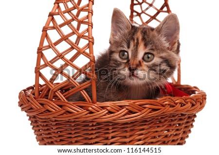 Cute little kitten in a wicker basket isolated on white background