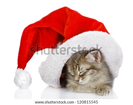 cute little kitten in red christmas Santa hat, isolated on white background
