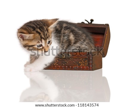 Cute little kitten in the vintage wooden chest isolated over white