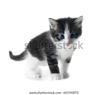 cute little kitten isolated over white shallow dof