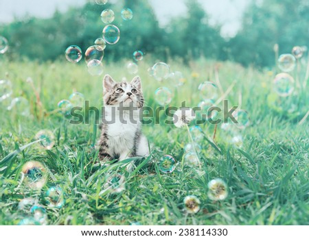 Cute little kitten looking at soap bubbles on summer meadow. Image with vintage instagram filter