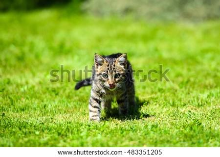Cute little kitten on green grass #483351205