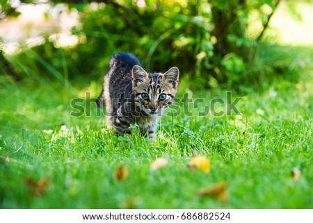 Cute little kitten on green grass #686882524