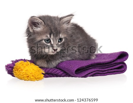 Cute little kitten on the knitted scarf isolated on white background
